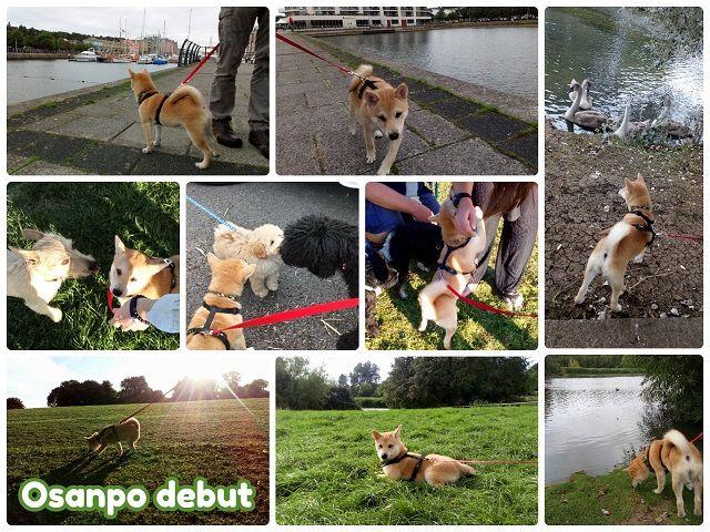 Osanpo_debut